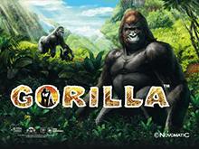 Автомат Gorilla в казино Вулкан на деньги
