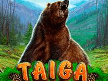 Тайга от Novomatic – азартная игра